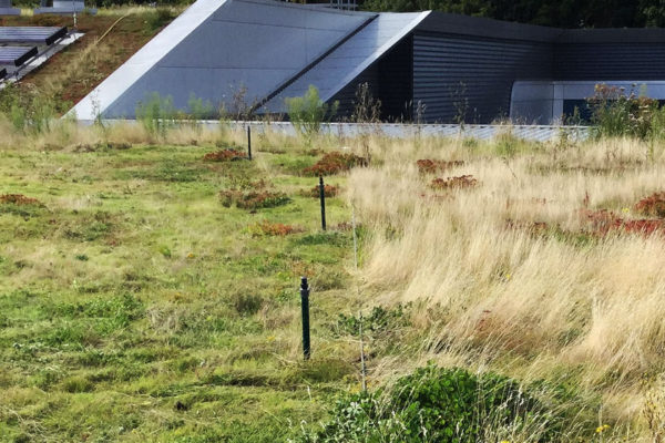 Cut / no-cut biomass management on a flat green roof