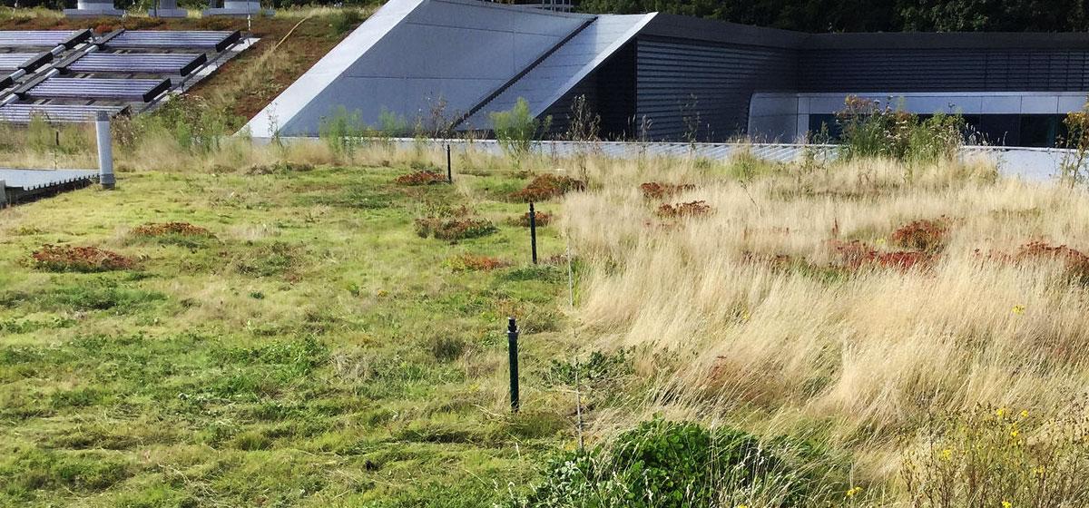 Cut/no-cut biomass management at Brighton Uni's Huxley Building
