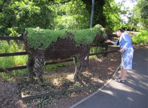 stone crop cow covered in herbs being stroked