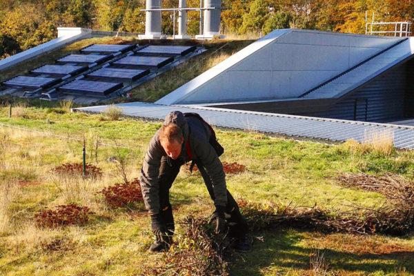 Bio diversity hotspots, nature spots by Organic Roofs