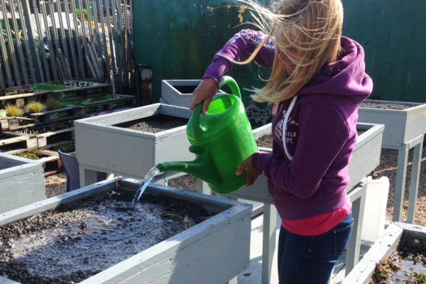 Woman pouring water over sample beds by Organic Roofs