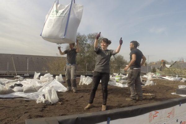 Stella of Organic Roofs