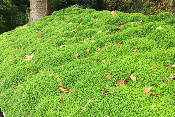 New replacemnet green roof for organic roofs