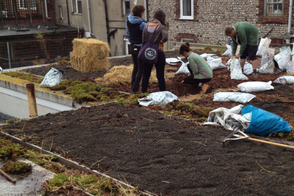 people replacing a green roof for organic roofs