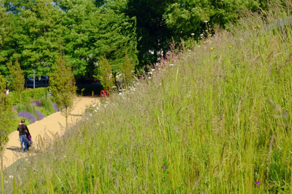 Velo Café Green Roof with grasses and wildflowers - by Organic Roofs Brighton