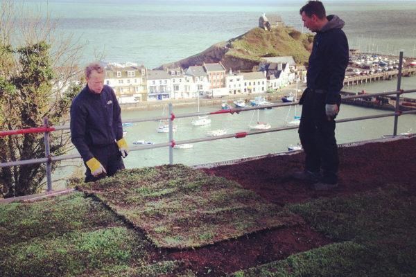team installing a sedum roof