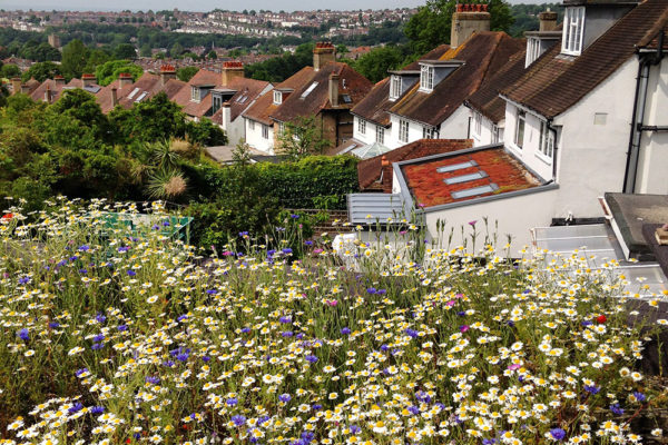 example of a seed meadow in bloom on a flat green roof