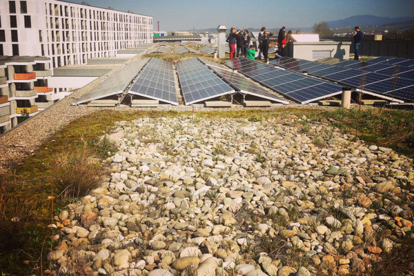example of a shingle, flat green roof with solar panels
