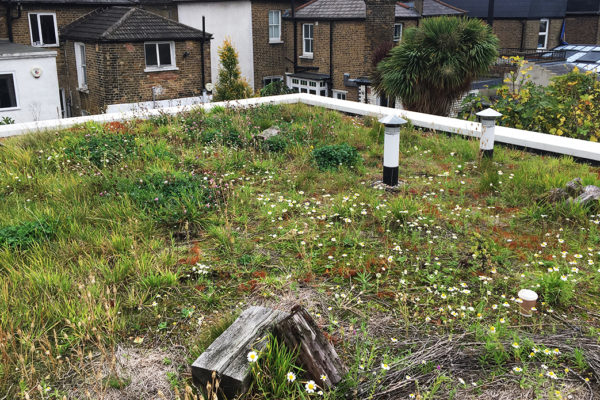example of a wild flower green roof