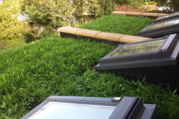 Green Roof Benefits Organic Roofs