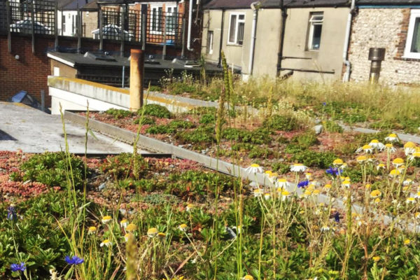 after image of a flat, green roof we nursed back to health