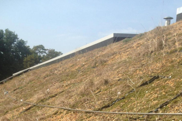 dead, pitched green roof which we revived