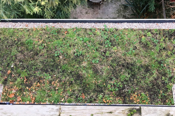 Flat green roof in winter by Organic Roofs