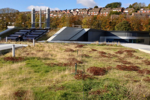 Huxley building - Brighton Unviersity green roof installation