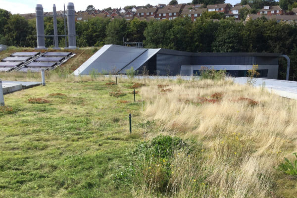 Cut / no cut green roof management