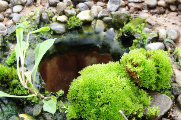 moss maintenance drainage for green roofs