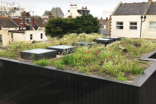 haybase development on a flat, green roof by Organic Roofs