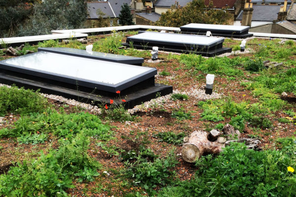 showing wild flowers and plant development on a green roof