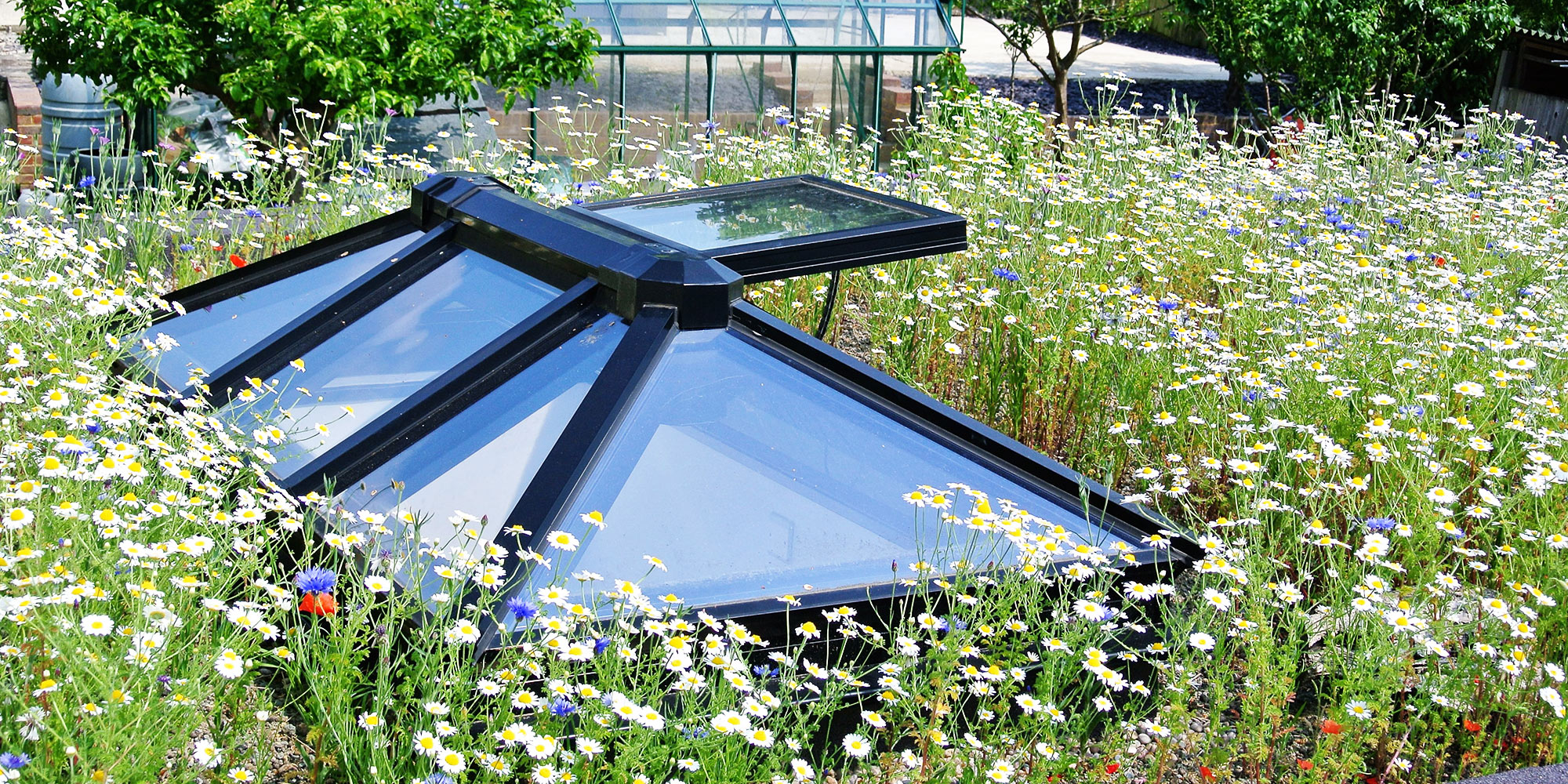 Green Roof Plant Development Organic Roofs