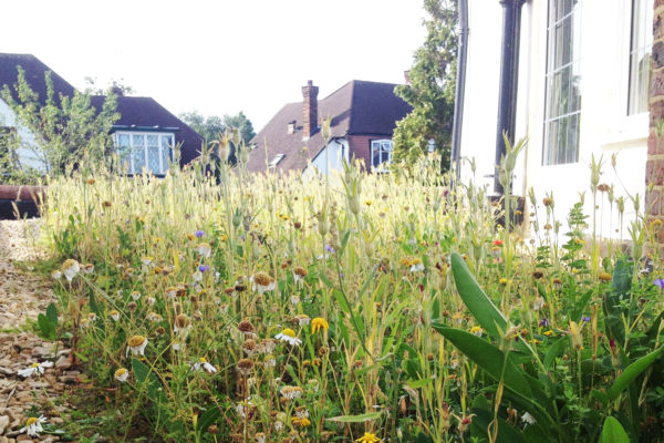 Flowers growing on a flat green roof retrofit by Organic Roofs