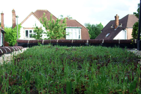 Initial plat development on a flat, retrofit green roof