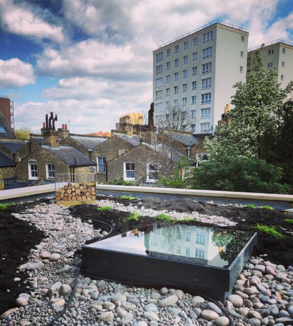 green roof hackney